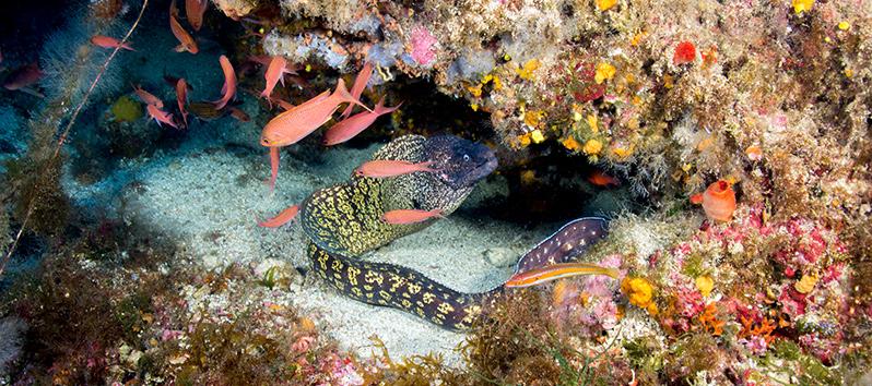 Buceo, deportes acuáticos en Mallorca
