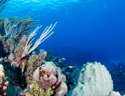 diving in the Balearic Islands
