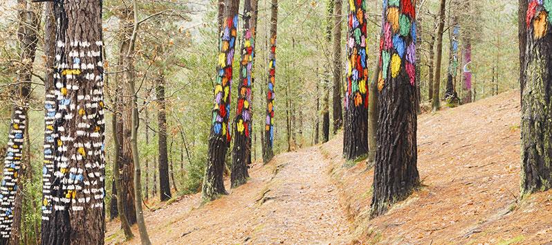 mejores lugares para unas vacaciones deportivas, El Bosque de Oma (Bizkaia)