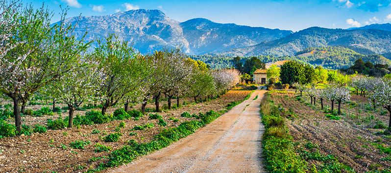Ruta de los almendros de Mallorca, Manacor